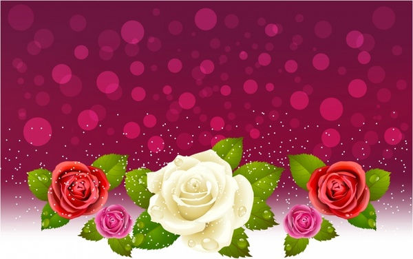 Background of red and white roses