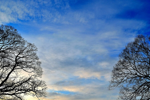background of sky and trees