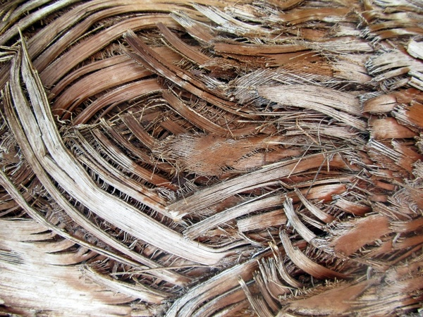 background palm bark