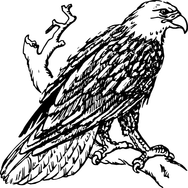 Graphic Library Stock Bald Eagle Clipart S