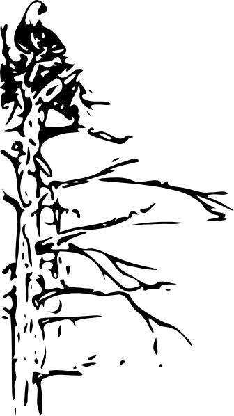 Bald Eagle Black And White Hawk Clip Art