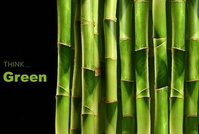 bamboo closeup picture 2