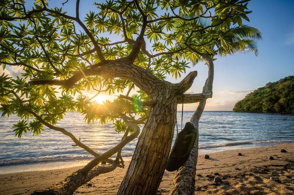beach beautiful forest holiday landscape nature