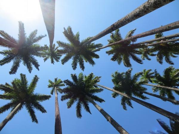 beach coast coconut daytime exotic island light