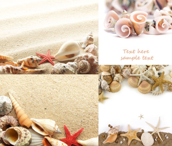beach shells and highdefinition picture