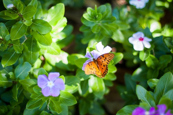 beautiful bee bloom blossom bright butterfly closeup