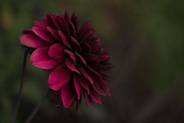 closeup of beautiful red flower