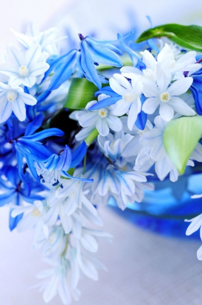 beautiful blue flowers 02 hd pictures
