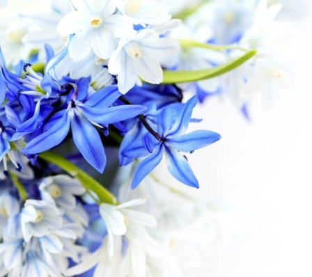 beautiful blue flowers 04 hd pictures
