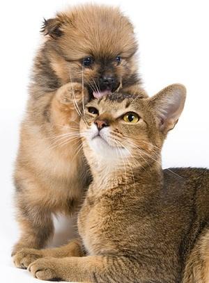 beautiful cat picture 1