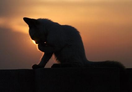 beautiful cat picture 2