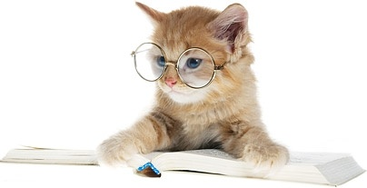 beautiful cat picture 6