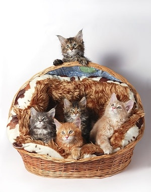 beautiful cat picture 7