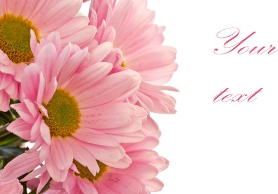beautiful chrysanthemum 02 hd pictures
