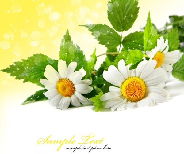 Flower images free stock photos download (10,850 Free stock