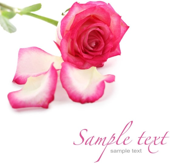beautiful flowers and greeting cards 02 hq pictures