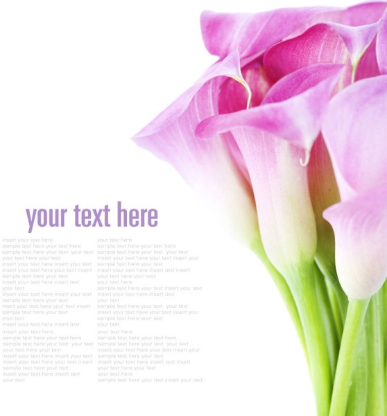 beautiful flowers background 02 hd pictures