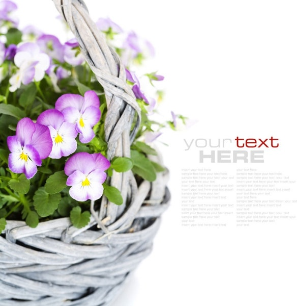 beautiful flowers background 04 hd pictures