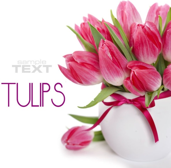 beautiful flowers background 05 hd picture