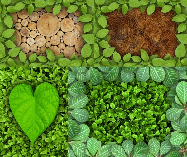 beautiful green leaves border highdefinition picture