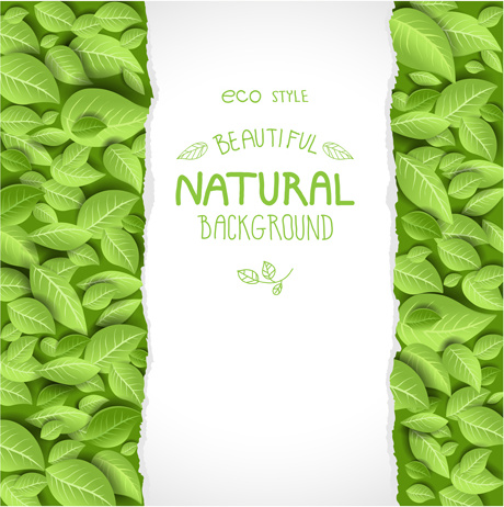 beautiful green leaves natural background vector