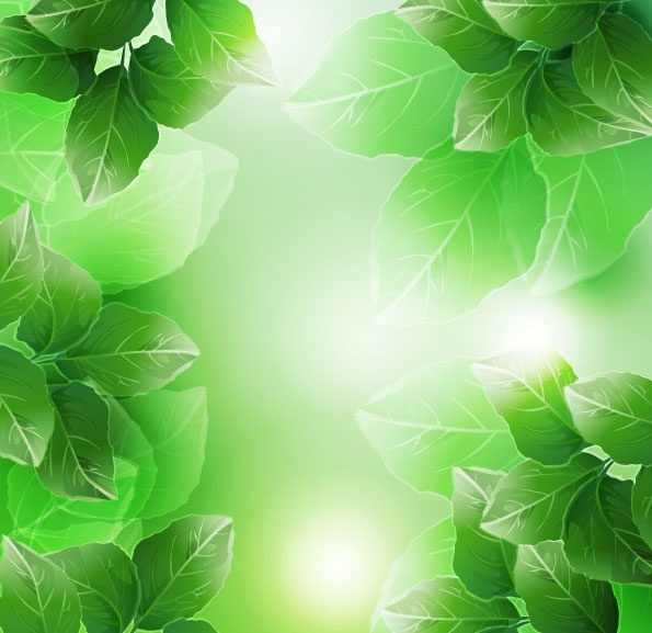 beautiful green leaves vector