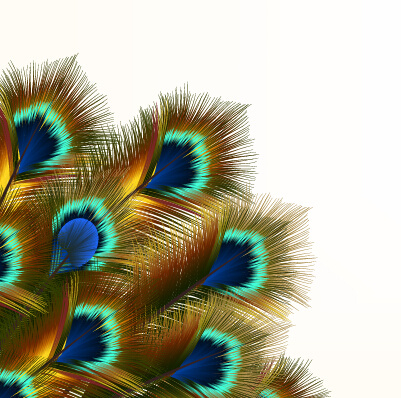peacock feather vector design free vector download  477 fire extinguisher clip art free fire clip art free outline