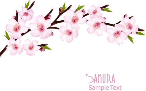 Ai Sakura Nude Photos 6