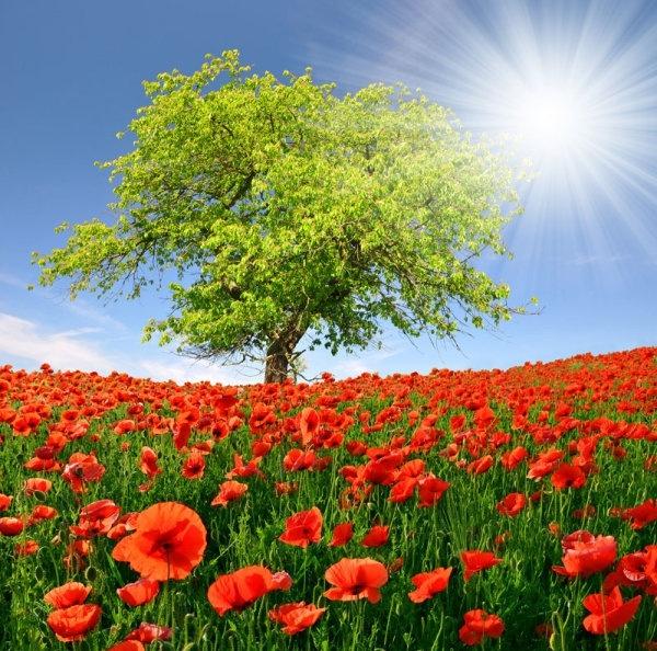 Images download beautiful natural image download free stock photos.
