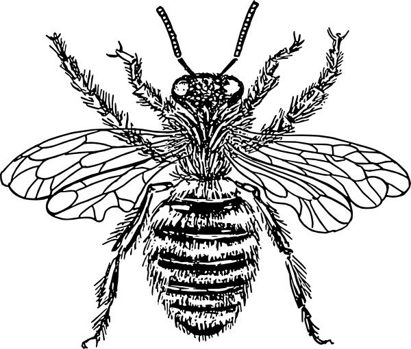 bee queen clip art free vector in open office drawing svg