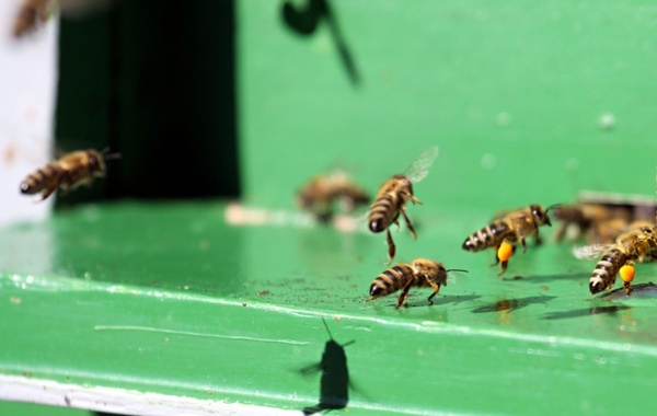 bees are landing