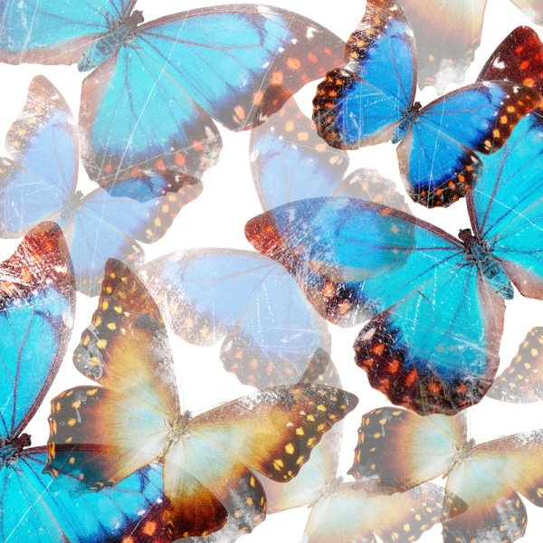 Flower And Butterfly Images Free Stock Photos Download 11 287 Free Stock Photos For Commercial Use Format Hd High Resolution Jpg Images