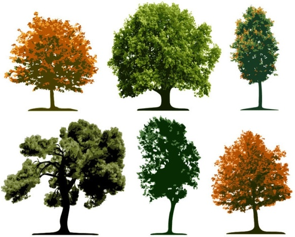 big trees 01 vector