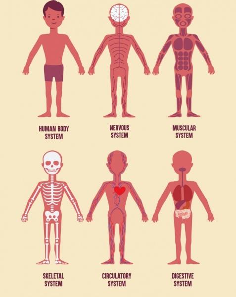 biology background human physics organs icons