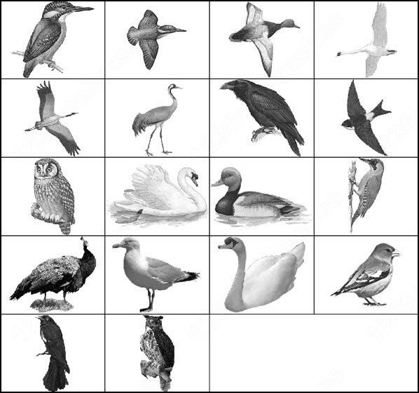 bird brush