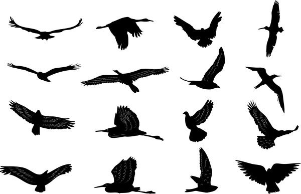 bird silhouettes collection