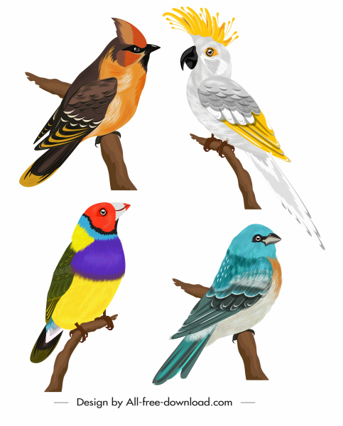 bird species icons colorful classical sketch