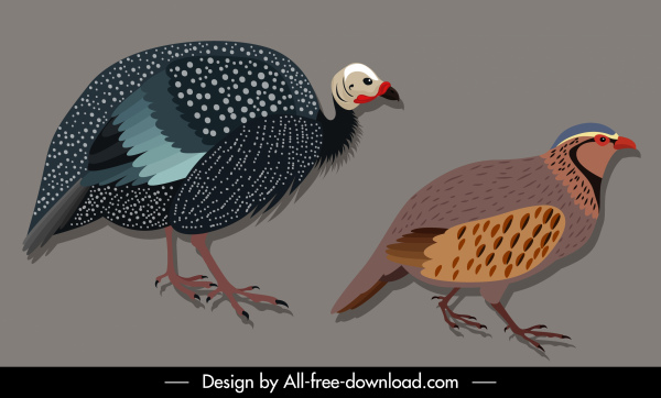 bird species icons francolin guinew fowl sketch