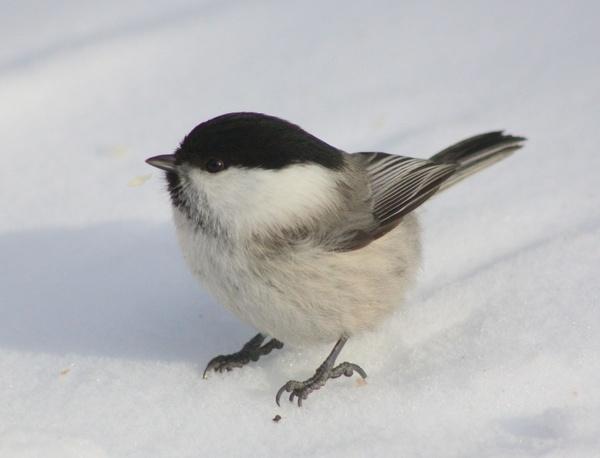 bird winter snow