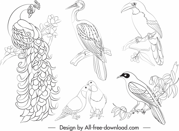 birds species icons black white decor handdrawn outline