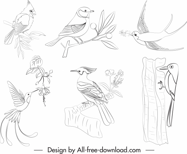 birds species icons black white handdrawn sketch