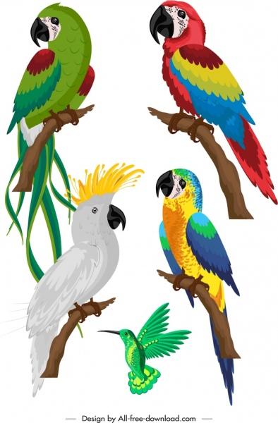 birds species icons colorful parrots woodpecker sketch