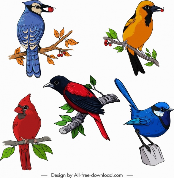 birds species icons colorful sketch perching gesture