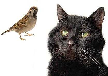 black cat and bird stock photo