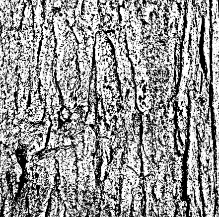 black textures grunge background vector