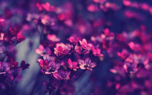 beautiful blossom flowers field