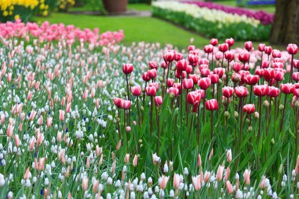 Beautiful Garden House Free Stock Photos Download 9 178 Free Stock Photos For Commercial Use Format Hd High Resolution Jpg Images