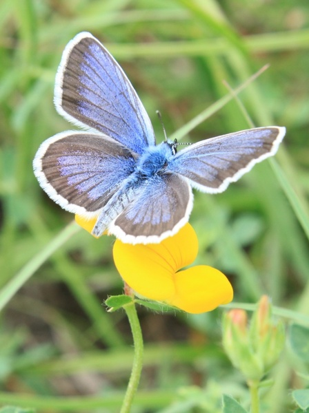 Flower And Butterfly Images Free Stock Photos Download 11 287 Free