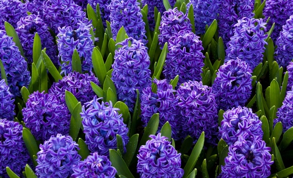 Blue Flowers Wallpaper Free Stock Photos Download 16 213 Free Stock Photos For Commercial Use Format Hd High Resolution Jpg Images