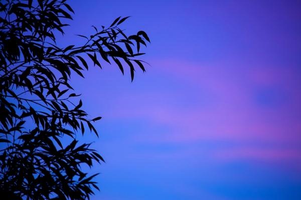 blue leaf silhouette